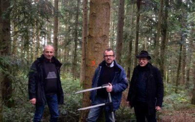 En forêt pour sélectionner les arbres qui, une fois écorcés, formeront la charpente du hall.